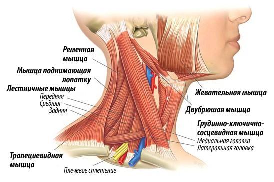 Тренируем шею