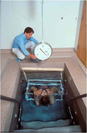 Как измерить процент жира в организме?