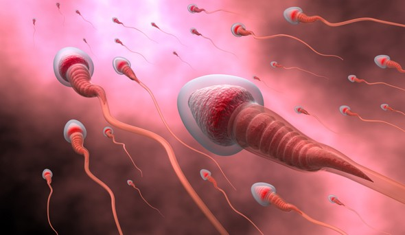 Тренировки с отягощениями влияют на сперму