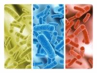 Как восстановить микрофлору желудка