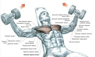 Лучшие упражнения для груди (грудных мышц)