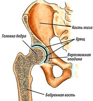 тотер на коленный сустав