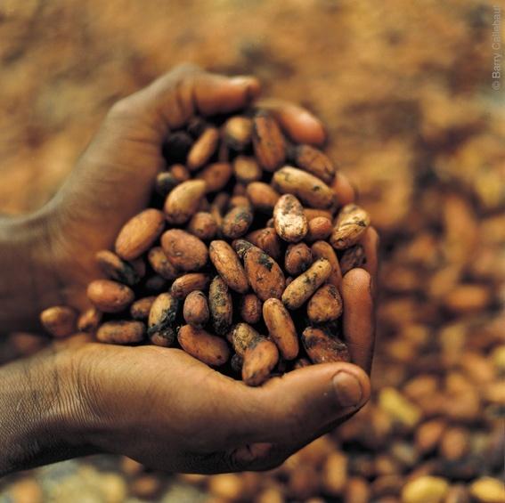 Польза сырого какао для здоровья